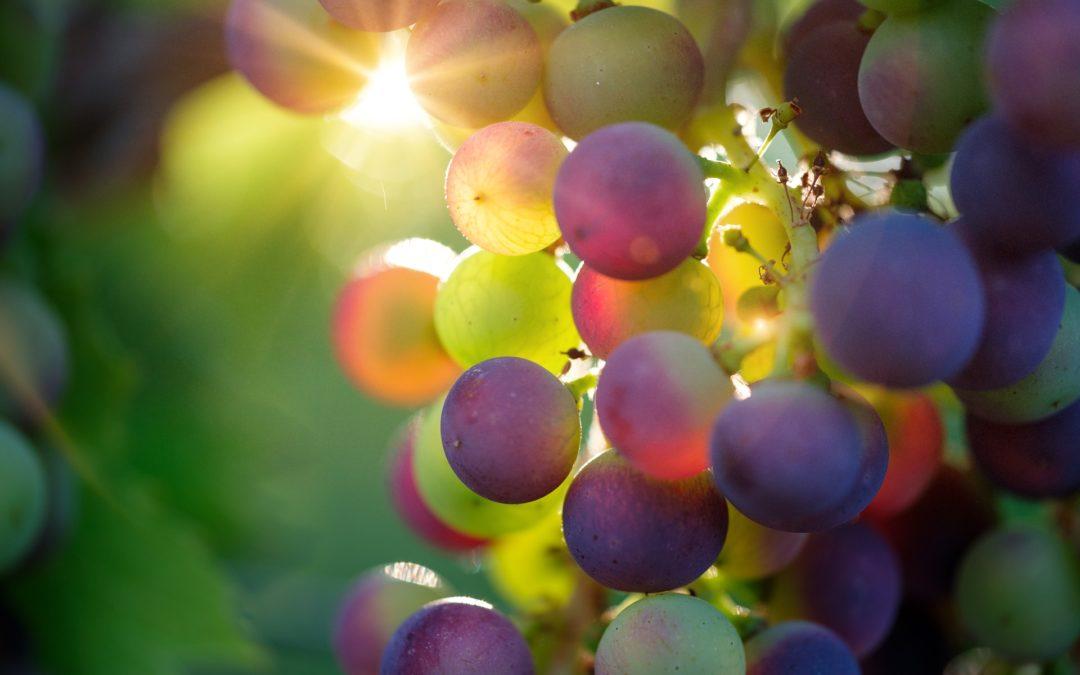 OCM Vino, Contributo a fondo perduto fino al 50% per la promozione sui mercati dei Paesi terzi